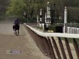 Короткая жизнь скаковой лошади...